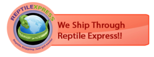 Reptile Express Shipping Live Animals Snakes Boa Ball Python